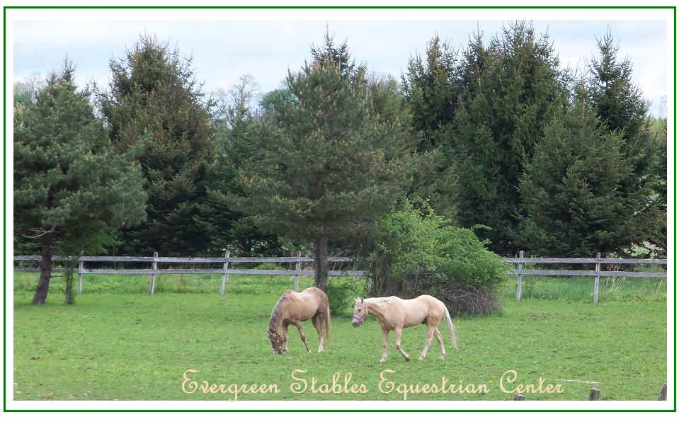 Green pasture with two horses and evergreen trees